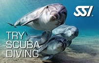 182479-Try Scuba Diving